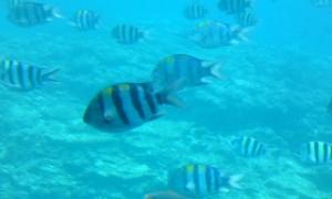お魚の群れ1
