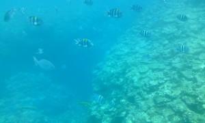 お魚の群れ3