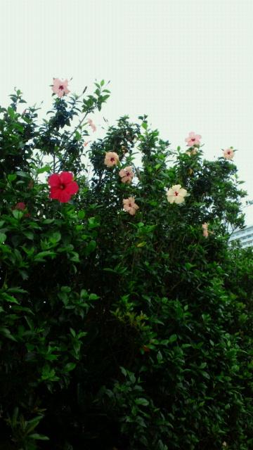 今日の沖縄!