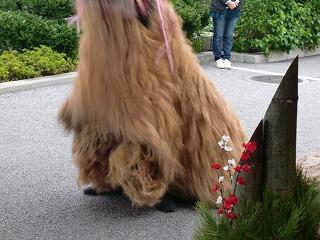 踊る獅子舞2