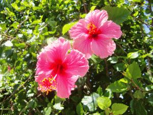 夏空に映える花